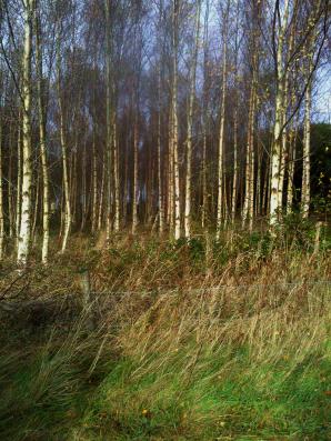 minor-woods